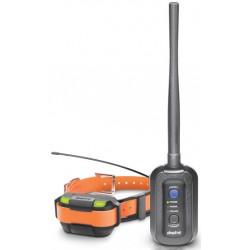 Pathfinder collier de repérage GPS et dressage